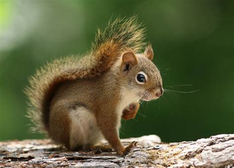well the squirrels are back commercial script fire department to host squirrel slam killing spree as a