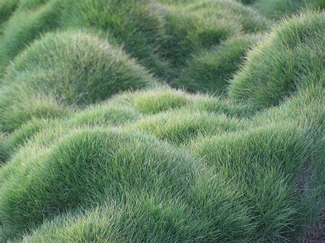 Grass Garden by Grass Inspiration It S Not All Bad Pith Vigor