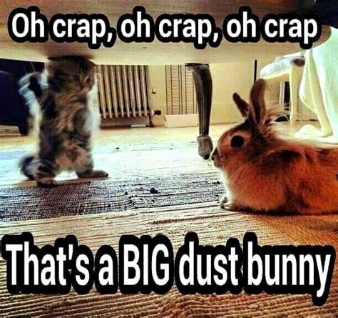 Funny Easter Bunny Memes - best 25 bunny quotes ideas on pinterest funy quotes