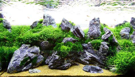 Batu Telur Pertified Wood Es 38 mini landscape seiryu set 5kg akvarista cz