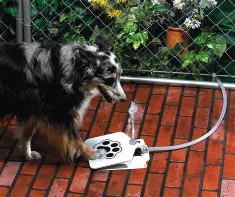 Dog Faucet Attachment Dog Push Pedal Water Fountain Doggie Fountain