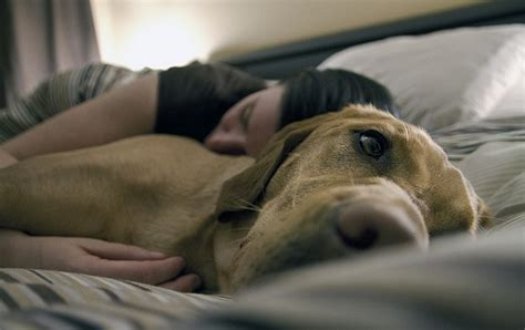 how to make a puppy sleep 5 excellent reasons to sleep next to your