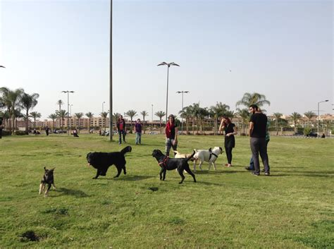 places to pet puppies 9 places you didn t you could take your in cairo