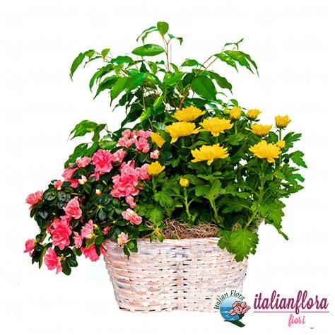 spedizione fiori roma spedizioni fiori roma spedizioni fiori roma alessandro