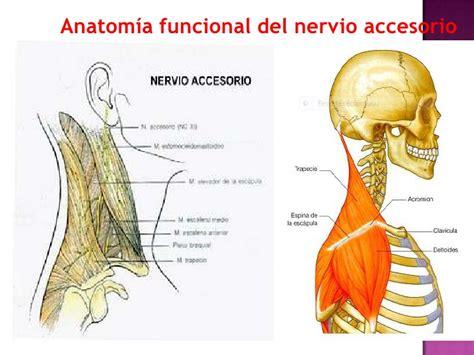 anatomia de latarjet ruiz 4 edicion pdf descargar libros anatomia humana latarjet 4 edicion tomo 1 pdf gratis