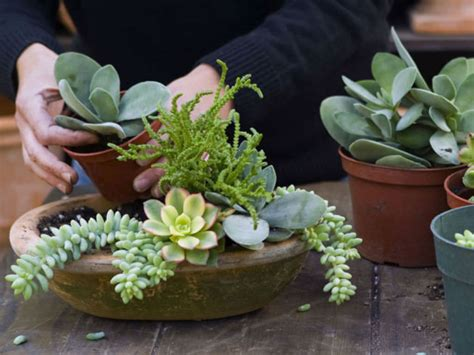 succulents that don t need light everything you need to know about growing and caring for