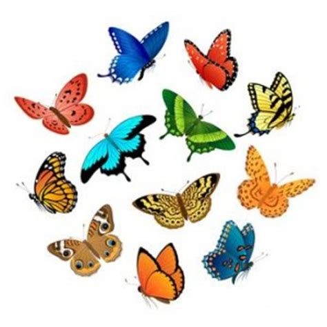 farfallina testo la farfallina poesia di camilla soldato i testi d