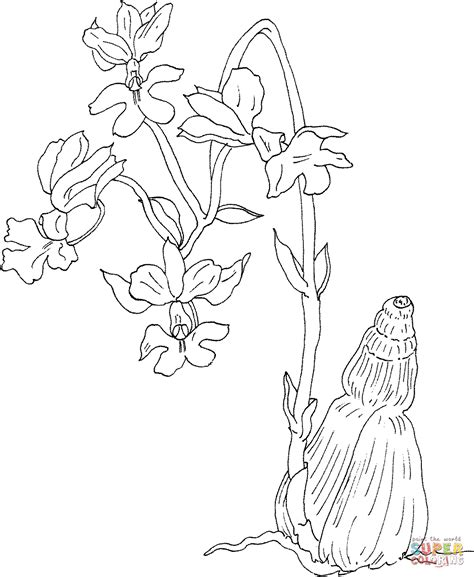 orchid coloring pages calanthe vestita var regnieri orchid coloring page free