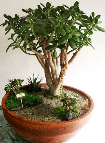mini plants the international miniature gardens from the great annual