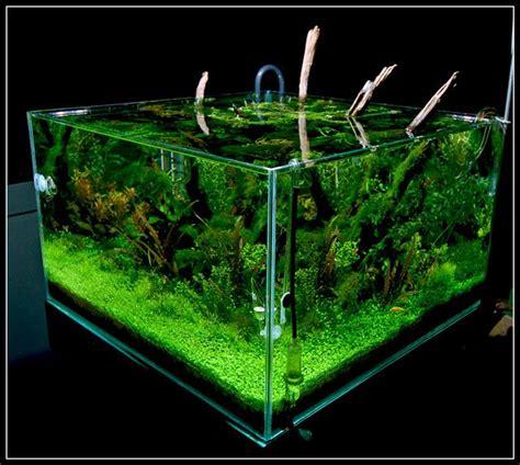 cube aquarium aquascape planted tank aquascape cube live plants aquarium
