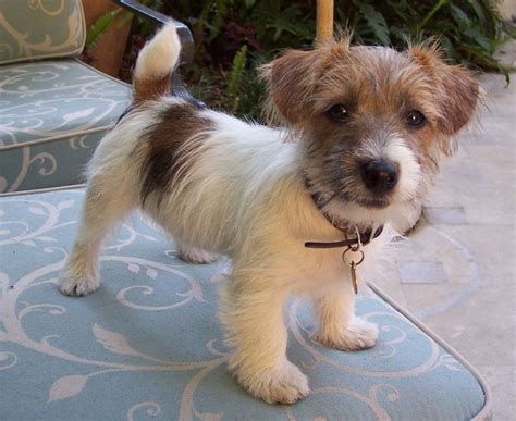 Longs Shirt Mix 5 Picture 17 best images about terriers on