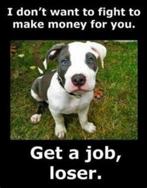 Pitbull Puppy Meme - pit bull memes on pinterest dog memes dogs and true stories