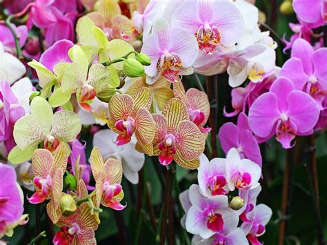 Harga Orchid Florist by Orchid Garden 12606 Wallpapers13
