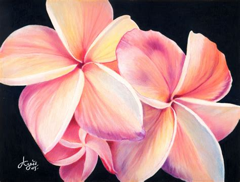libro flowers in colored pencil plumeria flowers x posted on colored pencil wetcanvas drawing ideas colored