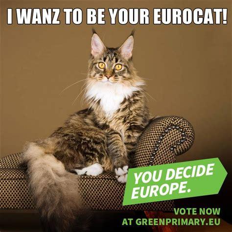 Katzen Meme - katzen meme 28 images die 25 besten ideen zu lustige