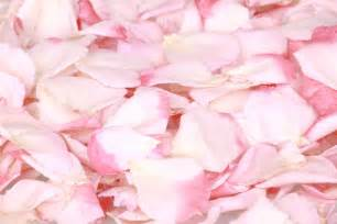 Strawberry pink freeze dried rose petals pale pink rose petals