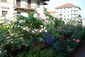 piante ricanti da vaso piante da balcone sempreverdi piante sempreverdi da