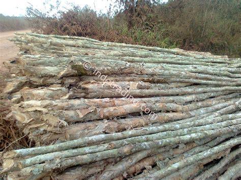 Jual Alat Hidroponik Palembang jual kayu gelam dolken harga murah palembang oleh cv alam