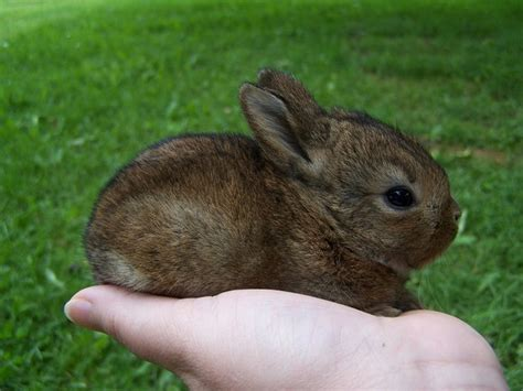 7 Tips On Caring For Baby Bunnies by Raising Baby Rabbits 9 Pics Animal S Look