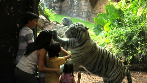 www zoo section com quot cara a cara con los animales salvajes quot spot bioparc