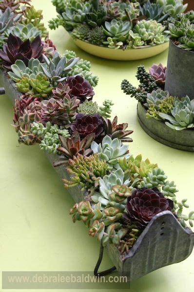 pin  succulent chic