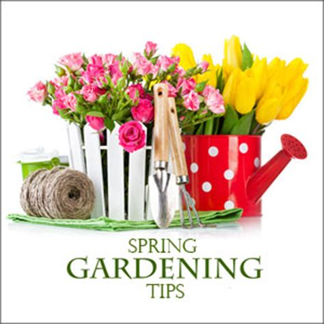 spring landscaping tips march northeast gardening tips