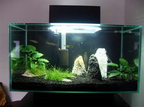 aquarium design homemade top 10 diy aquarium ideas for your next aquarium project