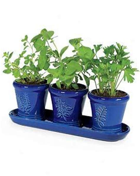windowsill herb garden kit small paperpots gardener s supply online store