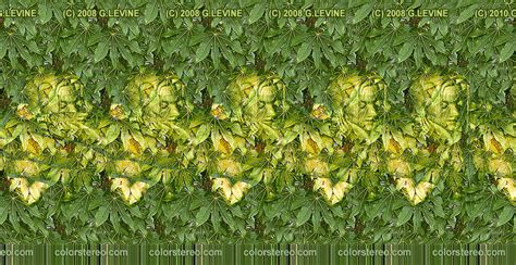 Garden Nymph Mts Gallery Color Stereo Stereograms