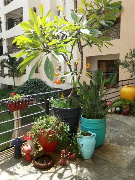 balcony garden  sunny balcony house tree plants