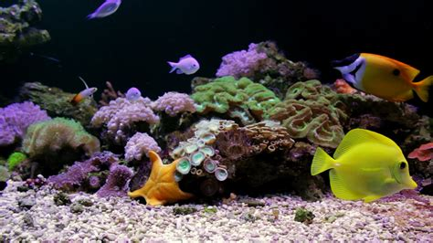 watch online fish tank 2009 full hd movie official trailer aquarium with starfish coral reef tank full hd youtube