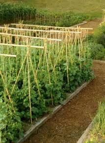 How To Tie Bamboo Trellis Bamboo Canes For Garden Fencing Amp Trellising For Climbing
