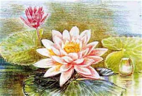 posizione fiore di loto la posizione fiore di loto un modo per imparare ad