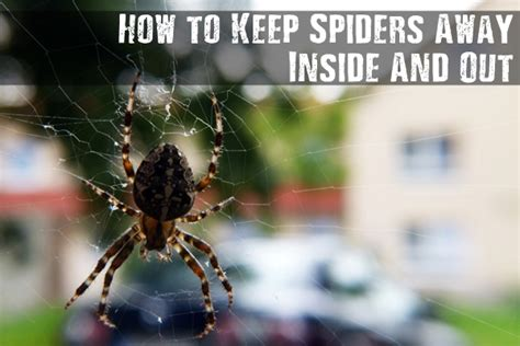 how to keep spiders away inside and out shtf