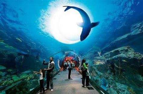 Zoologischer Garten Mall by Underwater Experience Picture Of Dubai Aquarium