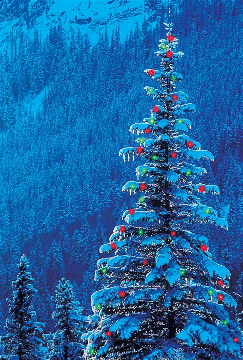 outdoor christmas tree photograph by darwin wiggett
