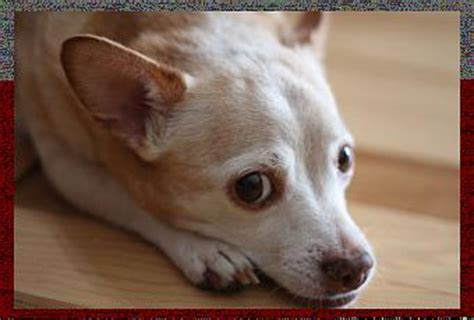 diabetes in dogs symptoms warning signs of diabetes in your paperblog