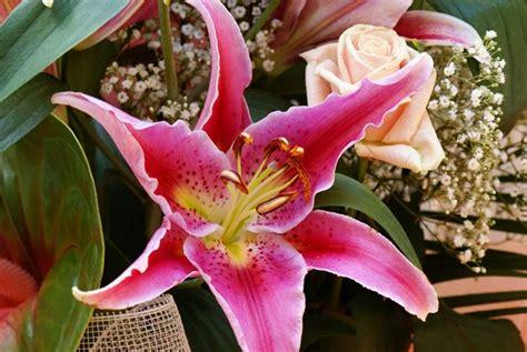 gigli fiore giglio bulbi i bulbi di giglio