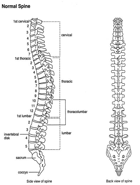back diagram spinal back diagrams diagram site