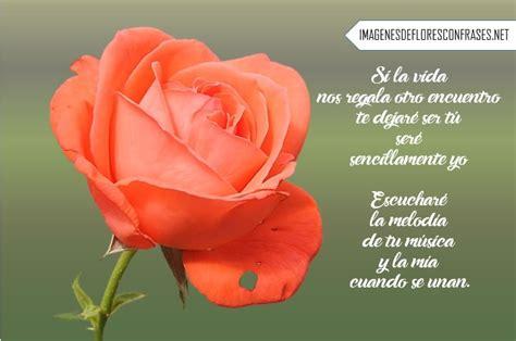 imagenes rosas con poemas im 225 genes de rosas con poemas cortos de amor