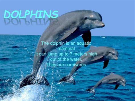 How High Is 150 Meters ocean animals 1