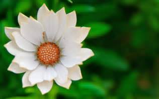 flower photography white flower close up photography wallpaper flower wallpapers free download wallpapers