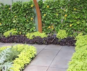 a persian carpet garden with espalier lemon pomegranate trees glamour drops