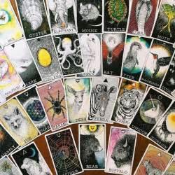 the wild unknown animal 30 best tarot decks oracle decks images on tarot decks tarot cards and oracle cards