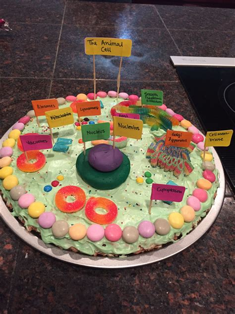 3d plant cell diagram project animal cell project edible animal cell model
