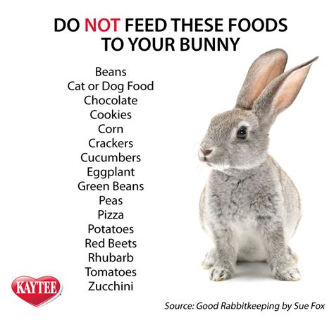 8 Tips On Caring For Pet Rabbits by Best 25 Baby Bunnies Care Ideas On Pet Bunny