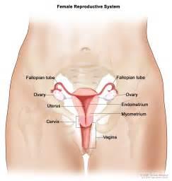 uterine sarcoma treatment pdq 174 patient version