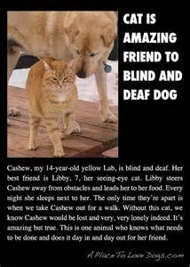 Blind Friend Wonderful Fifi And Fido Story Cat Is Friend To Blind And