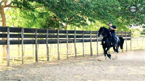 mi esposa cojiendo con su caballo videos el komander a caballo youtube
