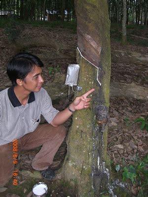 Pupuk Nongfeng Cabe pupuk perangsang getah karetpupuk masa depan
